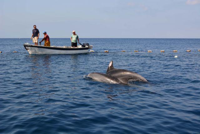 Liberados dos delfines mulares de la almadraba de la Azohía, Cartagena - 3, Foto 3