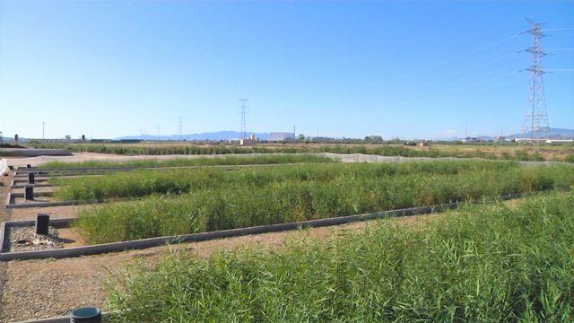Cefusa y la UPCT trabajan en la sostenibilidad de la granja del futuro - 3, Foto 3