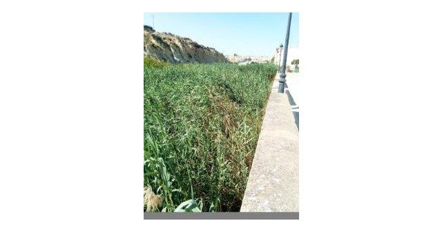 Ciudadanos solicita el acondicionamiento del cauce del río Mula - 2, Foto 2