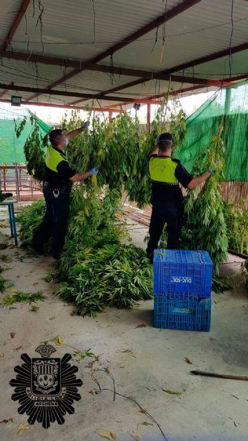 Desmantelan una extensa plantación de marihuana en el paraje archenero de Pago del Barranco.- - 3, Foto 3