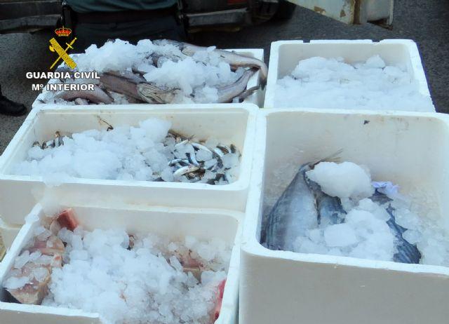 La Guardia Civil sorprende en Murcia a tres personas vendiendo gran cantidad de pescado de forma ambulante - 5, Foto 5