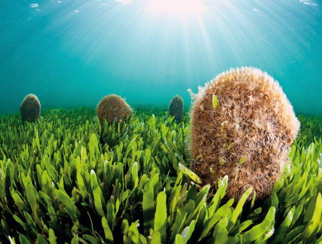 Más de 200 imágenes ofrecerán 'Una mirada al Mar Menor en el Museo de la Ciencia - 1, Foto 1