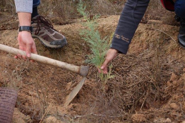ACUDE y el Ayuntamiento de Alhama plantan 100 ejemplares de tarays en la Alcanara - 1, Foto 1