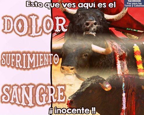 La Asociación GARM (Grupo Animalista Región de murcia) rechaza la corrida de toros a beneficio de la AECC - 1, Foto 1