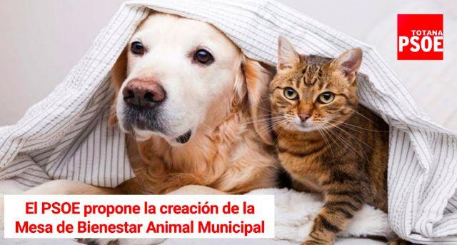 Se creará la Mesa de Bienestar Animal municipal tras la aprobación de la propuesta del Grupo Socialista - 1, Foto 1