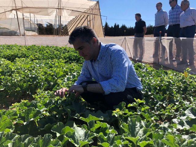 El Centro de Demostración Agraria de San Javier imparte doce ensayos en variedades de agricultura ecológica y en abonado ambiental
