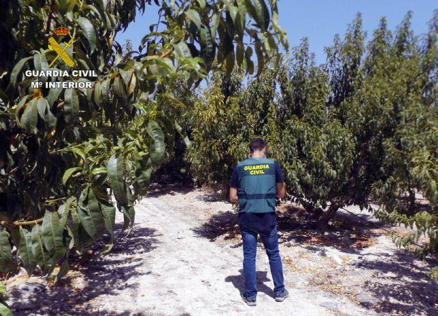 La Guardia Civil esclarece una decena de estafas a agricultores de la Vega Alta del Segura - 1, Foto 1