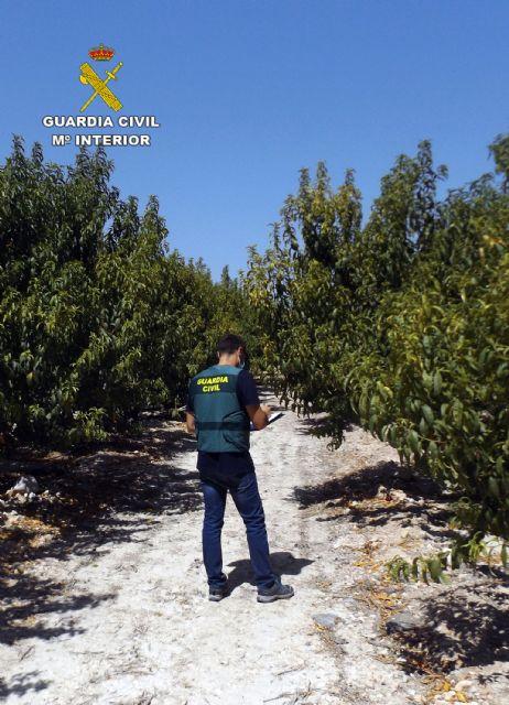 La Guardia Civil esclarece una decena de estafas a agricultores de la Vega Alta del Segura - 2, Foto 2