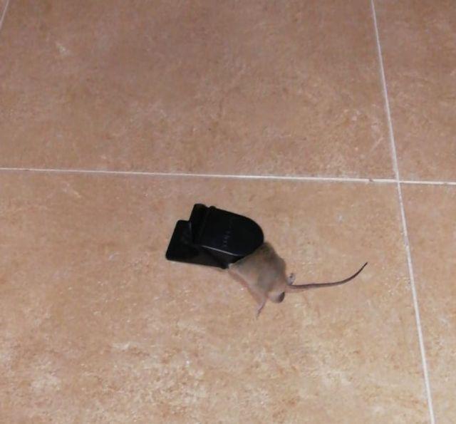 Los vecinos de más de medio centenar de comunidades de propietarios repartidas por todo el casco urbano sufren plagas de ratas, cucarachas y garrapatas - 2, Foto 2