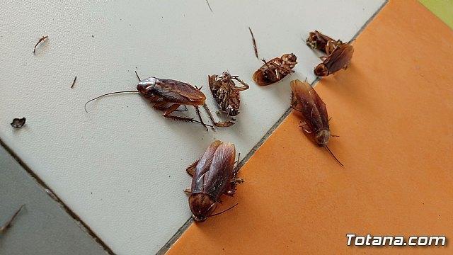 Fumigar cucarachas, una solución para limpiar la casa de posibles enfermedades - 1, Foto 1