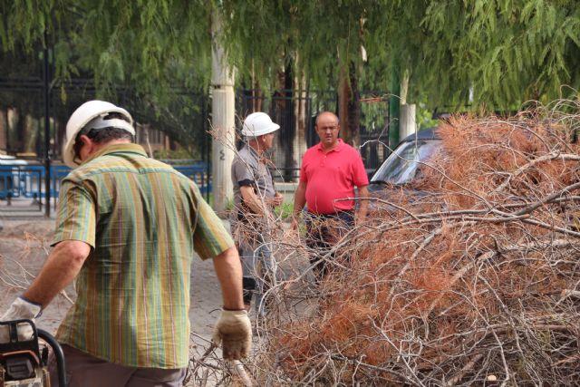 El deterioro de tres pinos secos en el Parque de La Cubana obliga a talarlos, Foto 2