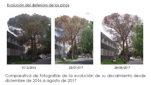 El deterioro de tres pinos secos en el Parque de La Cubana obliga a talarlos, Foto 4