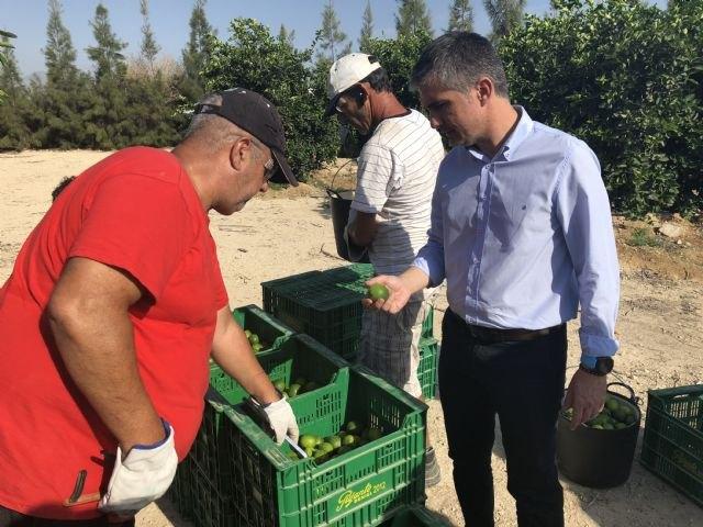 La producción de lima en la Región crece más de un 25 por ciento en los dos últimos años - 1, Foto 1