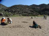 ANSE y Naturactúa plantan vegetación autóctona en las playas roturadas en Calnegre (Lorca)