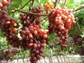 El Imida presenta en Singapur una ponencia sobre las variedades de uva obtenidas en el Programa de mejora genética
