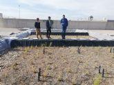 La Comunidad desnitrifica las aguas de la depuradora de Los Alcázares a través de un sistema piloto de restos de poda