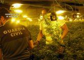 La Guardia Civil desmantela un invernadero clandestino con cerca de 2.000 plantas de cannabis