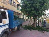 Comienzan los trabajos de poda de las moreras en parques y jardines y las vías públicas de Totana