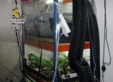 La Guardia Civil desmantela en Murcia dos invernaderos clandestinos de marihuana