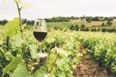 Agroseguro adelanta el pago de 4,65 millones de euros de indemnizaciones por danos en uva de vino