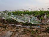 La Consejer�a rechaza la petici�n de ayudas a los agricultores alhameños afectados por las lluvias y el granizo