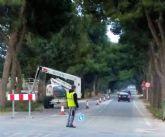 Comienza la poda de los mas de 200 eucaliptos y pinos de la N301