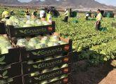 Gruventa vislumbra un óptimo nivel de crecimiento del sector hortofrutícola español en Asia y Emiratos Árabes