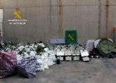 Desmantelan un  invernadero de marihuana en Puerto Lumbreras