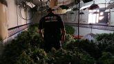 La Policía Local de Torre Pacheco desmantela un punto de cultivo y producción de marihuana