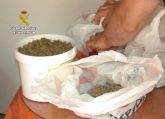La Guardia Civil desmantela en Mula un invernadero de marihuana con más de medio millar de plantas y 200 esquejes