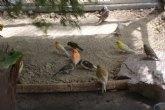 La Asociaci�n Cultural Ornitol�gica Naturalista Alhameña dona medio centenar de ejemplares a la pajarera municipal