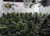 La Guardia Civil desmantela una plantación de marihuana en un domicilio de Cieza