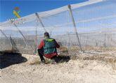 La Guardia Civil desmantela un grupo delictivo dedicado a la sustracci�n de uva en la comarca del Bajo Guadalent�n