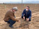 La Comunidad estudia la implantación del pistacho como un cultivo alternativo en la comarca del Altiplano