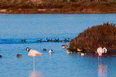 Medio Ambiente organiza actividades en las Salinas de San Pedro con motivo del Día Mundial de las aves migratorias