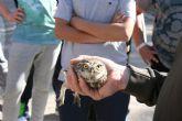 Liberan un mochuelo europeo y un cern�calo com�n en los parques regionales de Sierra Espuña y El Valle