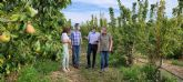 La Región de Murcia se consolida como la principal productora de Europa de pera Ercolini con Denominación de Origen Protegida