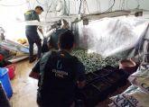 La Guardia Civil detiene a un peligroso delincuente por tenencia ilícita de armas y munición y desmantela una plantación de marihuana en su domicilio