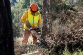 Las brigadas forestales inician la campaña de trabajos preventivos contra incendios forestales en los bosques de la Regi�n