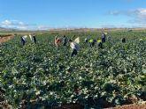Proexport: Un 97% de los trabajadores agrarios elige trabajar en el d�a de huelga convocado por CCOO y UGT