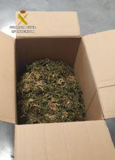 La Guardia Civil desmantela dos nuevos puntos de cultivo y venta de marihuana en Los Alcázares
