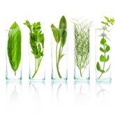 La UCM e Instituto Arkopharma ponen en marcha un ensayo clínico sobre la biodisponibilidad de las vitaminas naturales