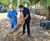 Saorín eleva al pleno una 'avanzada' ordenanza municipal de protección animal'