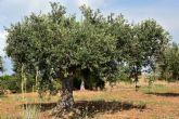 Agroseguro abona más de 21,5 millones de euros a asegurados de olivar por los siniestros de 2019