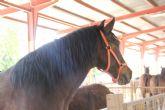 Puerto Lumbreras acoge una nueva edición de la Feria de Ganado Equino