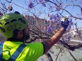 Utilizan insectos para conservar el arbolado de Murcia