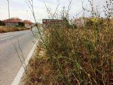 Solicitan a la Dirección General de Carreteras la limpieza de cunetas en varias vías secundarias y la travesía de El Paretón-Cantareros