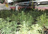 La Guardia Civil desmantela una plantación de marihuana en Mula