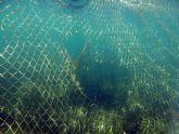 Pacto por el Mar Menor Redes antimedusas