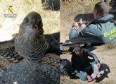 La Guardia Civil investiga a tres cazadores por la muerte de un gavilán en Moratalla
